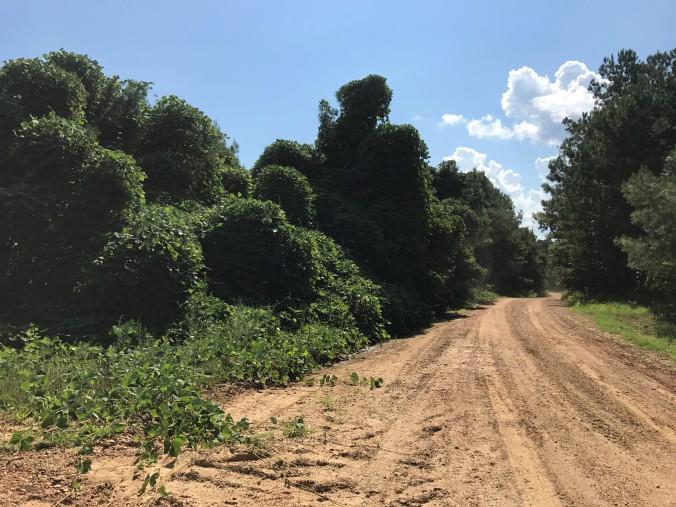 Kudzu Forest